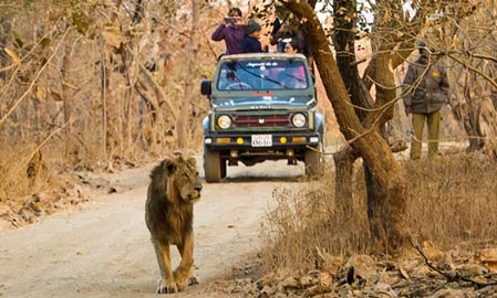 Gir Safari Booking