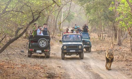 Gir National Park Safari Booking