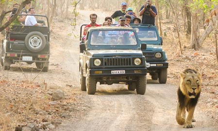 Lion Safari Camp Sasan Gir